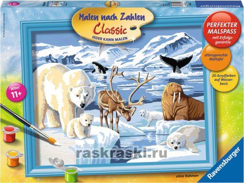 Раскраска по номерам животные арктики