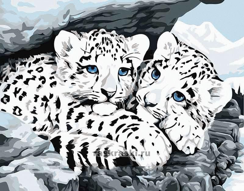 «Ягуарята» Цветной Premium ME049 — купить картину по ...