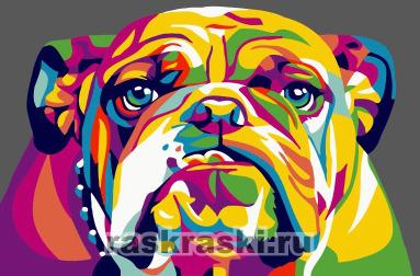 Paintboy / Картина по номерам «Радужный бульдог»