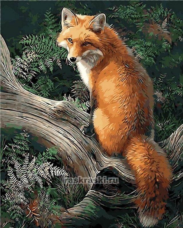 «Лиса в лесу» Menglei MG920 — купить картину по номерам в ...