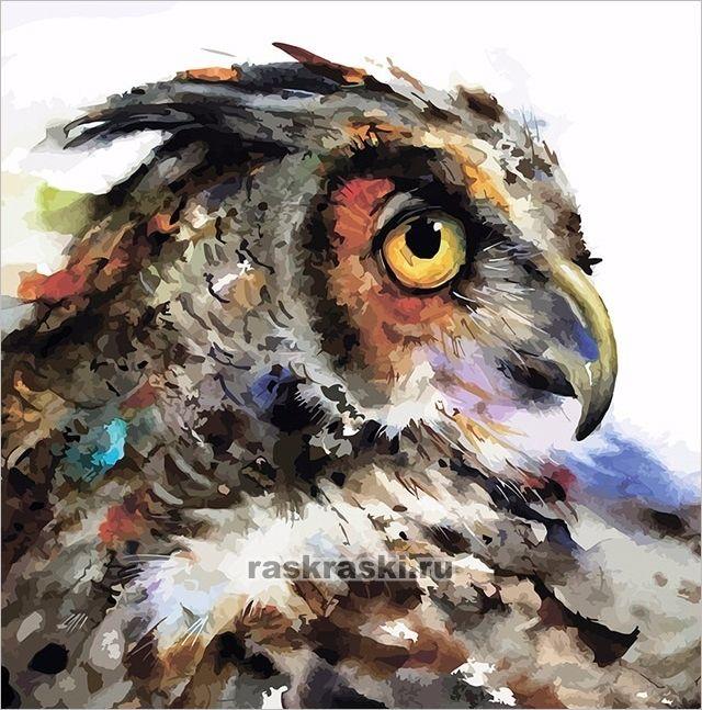 «Мудрая сова» Color-KIT AX010 — купить картину по номерам ...